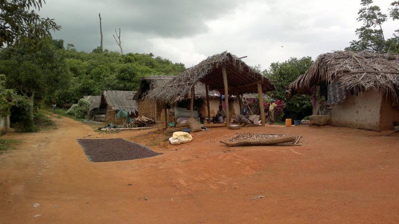 Skutki chciwości - rynek kakao to wciąż głównie wyzysk biednych rolników z małych wiosek